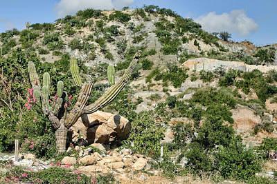 Mexican Desert Landscape Print by Linda Phelps