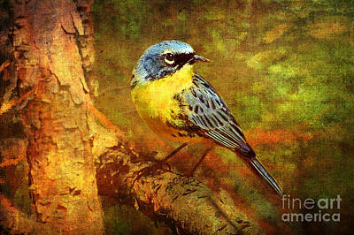 Warbler Digital Art - Michigans Rare Kirtlands Warbler by Lianne Schneider