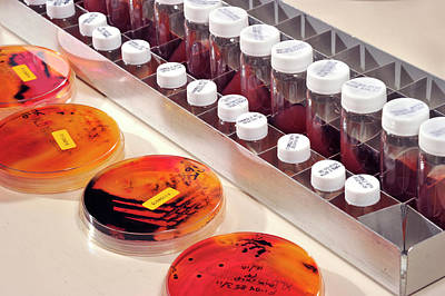 Microbiology Analysis Print by Public Health England