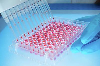 Microbiology Samples In Multiwell Tray Print by Wladimir Bulgar