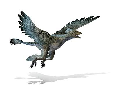 Paleozoology Photograph - Microraptor Dinosaur by Mikkel Juul Jensen