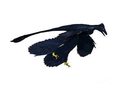 Microraptor Digital Art - Microraptor Dinosaur by Nobumichi Tamura
