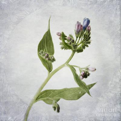 Blume Photograph - Mid Summer Scent by Priska Wettstein