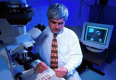 Midge Photograph - Midge Genetics Research by Scott Bauer/us Department Of Agriculture
