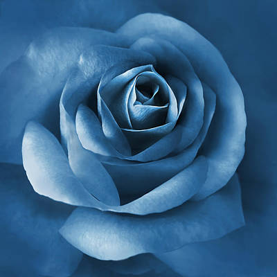 Rose Portrait Photograph - Midnight Blue Rose Flower by Jennie Marie Schell