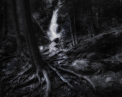 Tree Roots Photograph - Midnight Falls by Bill Wakeley