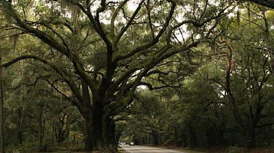 Granddaddy Photograph - Mighty Oak by Kathleen Golden