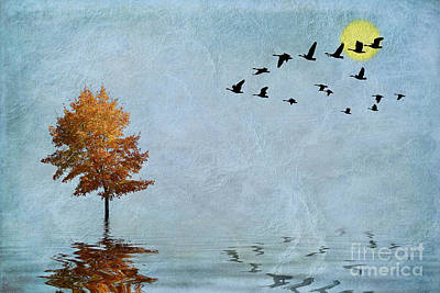 Geese Digital Art - Migration by John Edwards