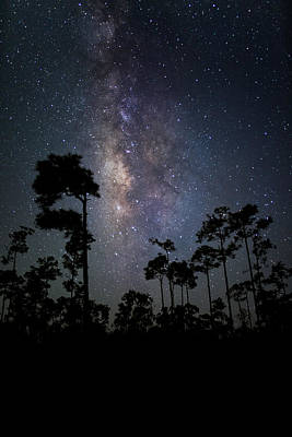 Trees Photograph - Milky Way Over The Everglades by Andres Leon