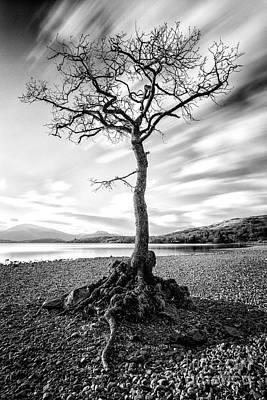 Scottish Photograph - Millarochy Bay Tree by John Farnan