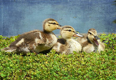 Mini Quackers 2 Print by Fraida Gutovich