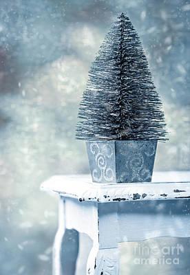 Dappled Light Photograph - Miniature Christmas Tree by Amanda Elwell