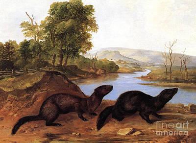 Wildlife Landscape Painting - Minks by Audubon