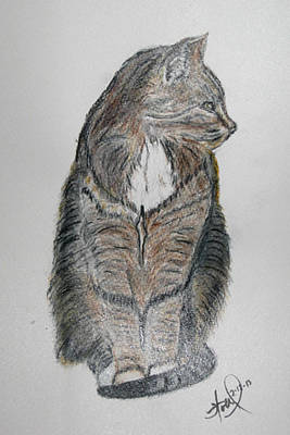 Gray Tabby Painting - Minnie In Watercolor by Hollye Knox