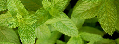 Mint Photograph - Mint by Gina Dsgn