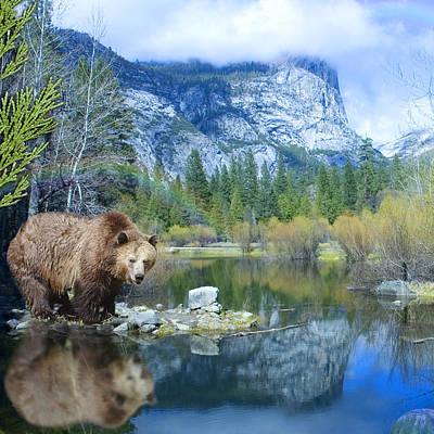 Alixandra Mullins Photograph - Mirror Lake Bear by Alixandra Mullins