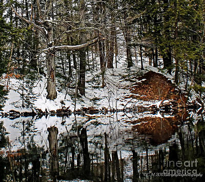 Maine Landscape Photograph - Mirror Mimicry by Catherine Melvin