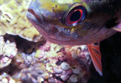 Miscellaneous Fish 5 Print by Dawn Eshelman