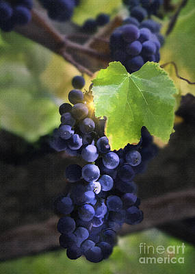 Purple Grapes Digital Art - Mission Grapes II by Sharon Foster