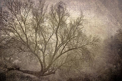 Mist Tree Print by Guido Montanes Castillo