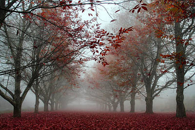 Misty Chestnut Grove Print by Georgia Fowler