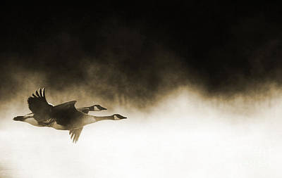 Goose Digital Art - Misty Flight by Tim Gainey