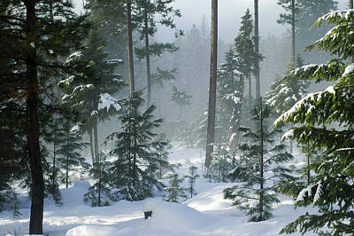 Misty Morning Snow Print by Annie Pflueger
