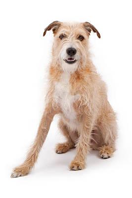 Mixed Breed Large Scruffy Dog Print by Susan  Schmitz