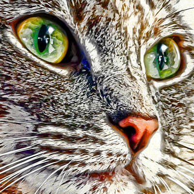 Kitten Digital Art - Miyu's Stare by David G Paul