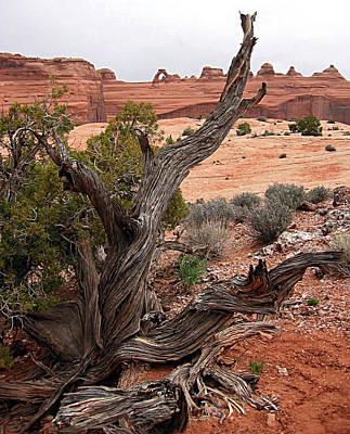 Moab Driftwood Print by Kimberlee Fiedler