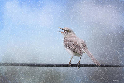 Mockingbird Photograph - Mockingbird In The Snow by Jai Johnson