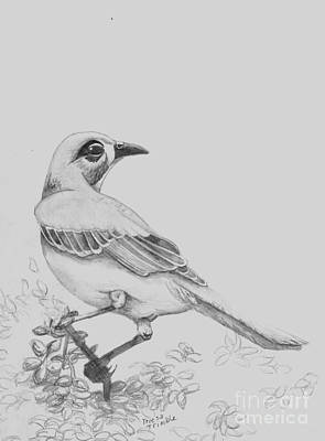 Mockingbird Drawing - Mockingbird by Teresa Trimble
