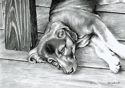 Dogs Drawing - Molly by Tom Hedderich