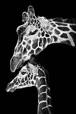 Mom And Baby Giraffe  Print by Adam Romanowicz
