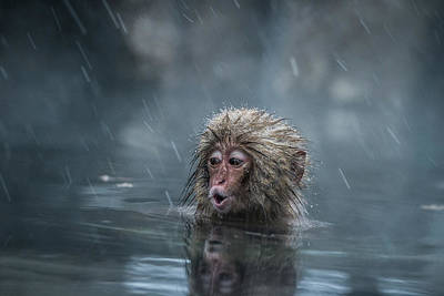 Monkey Photograph - Mom! by Takeshi Marumoto