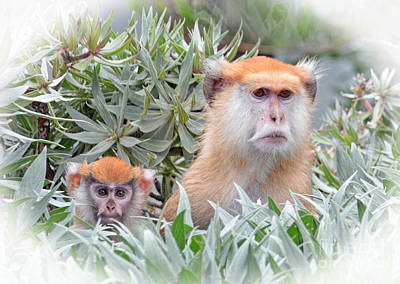 Face Photograph - Mommy And Baby Patas Monkeys On The Lookout by Jim Fitzpatrick