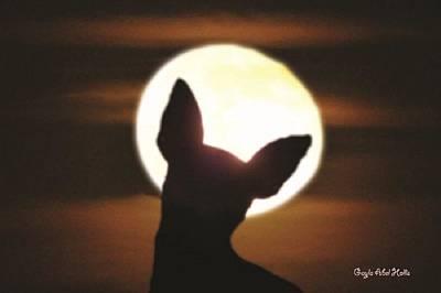 Photograph - Mon Cheri Moonlight by Gayla Hollis