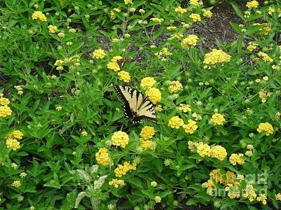 Green Photograph - Monarch by Ginger Price