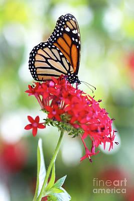 Monarch V Print by Pamela Gail Torres