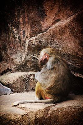 Monkey Business Print by Karol Livote