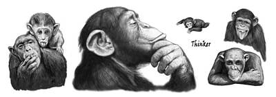 Monkeys Drawing - Monkey Long Drawing Art Poster by Kim Wang