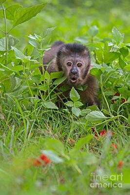 Hiding Photograph - Monkey Shock by Ashley Vincent