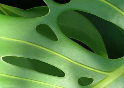 Monstera Print by James Temple