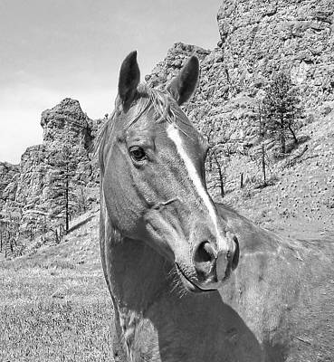 Montana Horse Portrait In Black And White Print by Jennie Marie Schell