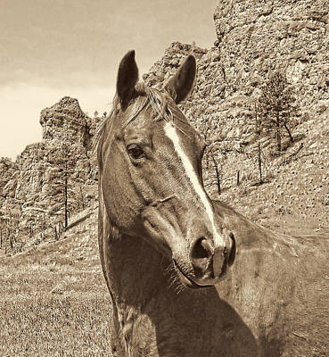 Montana Horse Portrait In Sepia Print by Jennie Marie Schell
