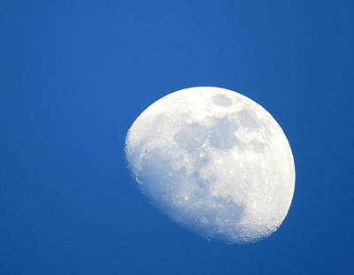 Moon In Blue Original by Suzanne DeGeorge