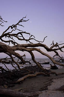 Cypress Stump Photograph - Moon Over Jekyll by Laurie Perry