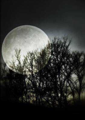 Tree Spirit Photograph - Moonlight by Marianna Mills
