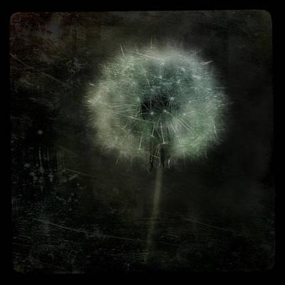 Moonlit Dandelion Print by Gothicolors Donna