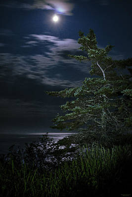 Quoddy Photograph - Moonlit Treescape by Marty Saccone